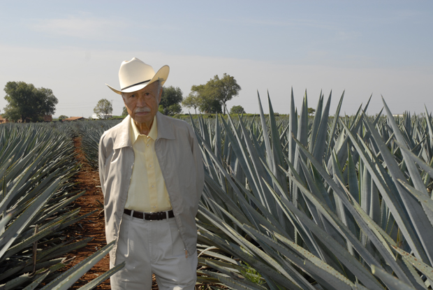 Agavenplantage in Mexico
