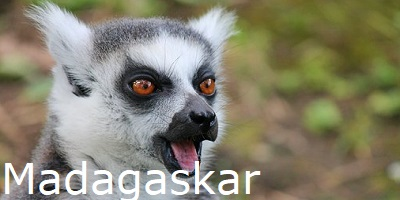Madagaskar, tier