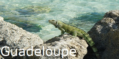 echse, guadeloupe